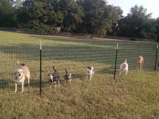 Resident dogs.  Your dog will have its own private, fenced-in yard that connects to the house.  We l